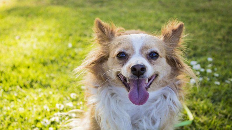 Mascotas encuentran lo que necesitan para moverse con libertad gracias a la ayuda de un anciano de 90 años. (Crédito: Pixabay/Danielle Giberti)