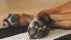 Veterinario comparte fotos de las patas quemadas de un perro y advierte sobre las aceras calientes
