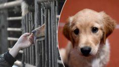 Rescatan 62 perros que iban a ser cocinados en el Festival de Yulin