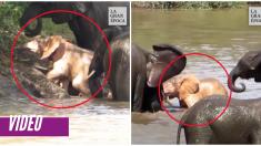 Este elefante bebé no sabe que es diferente al resto, ¡porque toda la manada lo adora tal cual es!