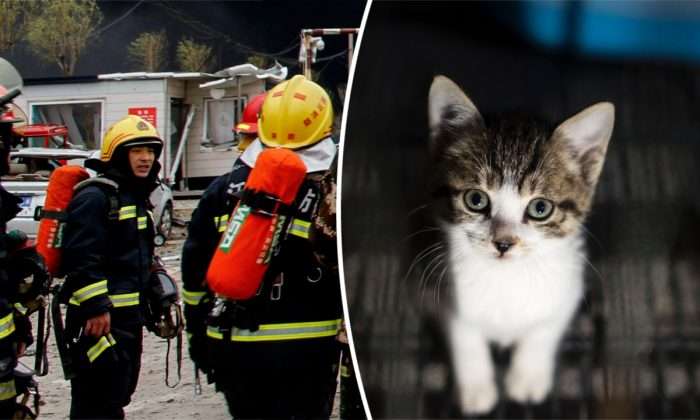 (Izquierda) Bomberos chinos. (STR/AFP/Getty Images) -- (Derecha) Un gatito en Shanghai, China. (Johannes Eisele/AFP/Getty Images)