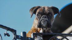 La imagen viral de un perro abandonado en un autobús ha logrado que encuentre una familia