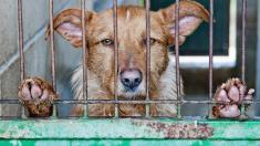 Perrito es abandonado con todos sus juguetes en un refugio porque su familia no tenía tiempo para él