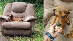 """Hallan a cachorro solo en un sillón junto a la carretera: """"Un día el karma se encontrará contigo"""""""