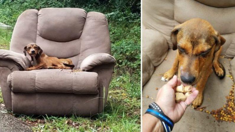 Fotos del cachorro abandonado en un sillón a un lado de una carretera de Brookhaven. (Fotos cortesía de Sharon Norton)