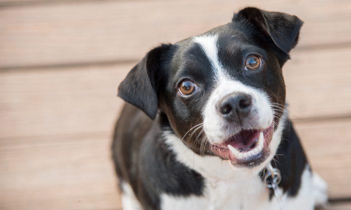 Imagen ilustrativa de un perro. (Shutterstock)