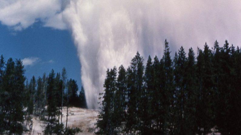 Una foto actualizada muestra el géiser Steamboat de Yellowstone en Wyoming, Estados Unidos. (Servicio de Parques Nacionales de Estados Unidos)