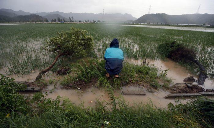 Imagen ilustrativa de un hombre en cuclillas frente a un campo de arroz en China. (STR/AFP/Getty Images)