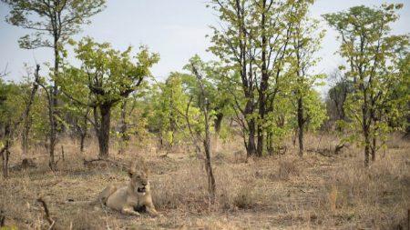 Indignación en Zimbabwe porque el Presidente del país ofrece tierras en parques nacionales a inversores chinos