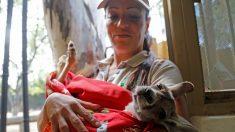 """Veterinaria mexicana relata cómo es ser """"mamá sustituta"""" de un canguro bebé que carga 12 hs por día"""