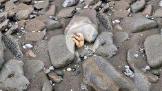 Pareja encuentra un pequeño perezoso lejos de su hogar y lo creen muerto, hasta que se acercan