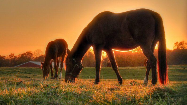 Foto ilustrativa de una yegua con su potrillo. (joiseyshowaa | Flickr)