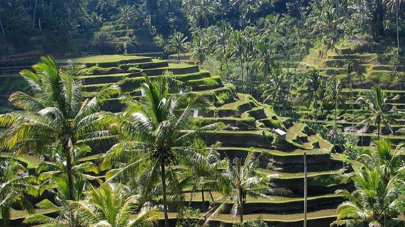 Bali, Indonesia. Imagen de archivo. (Wikimedia Commons)