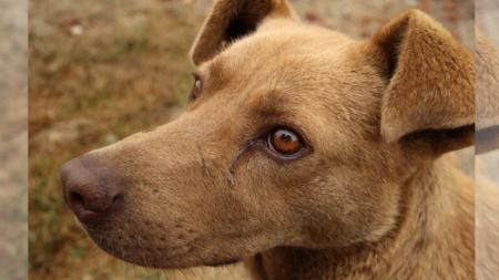 """Perrita """"llora"""" cada noche en espera de ser adoptada, una triste fotografía es su última esperanza"""