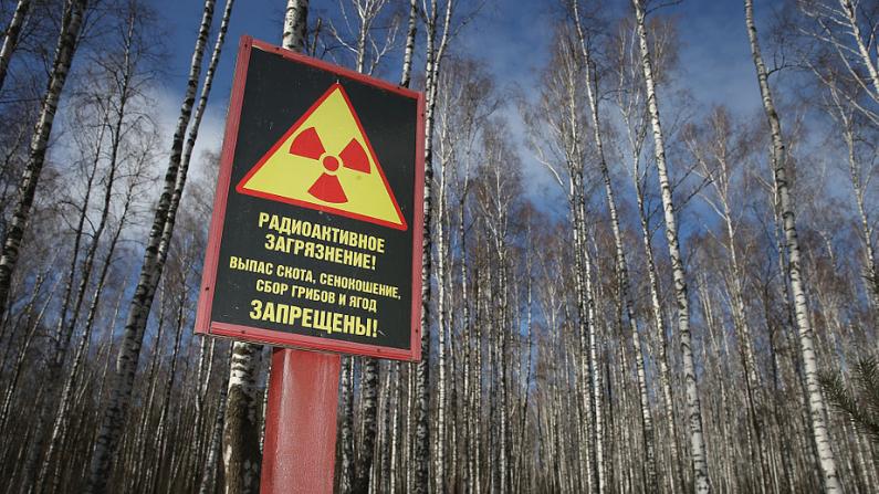 Un letrero al borde de un bosque advierte de la contaminación por radiación y prohíbe la recolección de bayas y hongos el 4 de abril de 2016 cerca de Chachersk, Bielorrusia, zona designada como todavía contaminada por la radiación del desastre nuclear de Chernóbil de 1986. (Crédito: Sean Gallup/Getty Images)