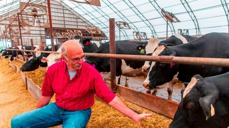 El agricultor Bill Sorg con sus vacas en su granja lechera en Hastings, Minnesota, el 3 de octubre de 2018. (KEREM YUCEL/AFP/Getty Images)