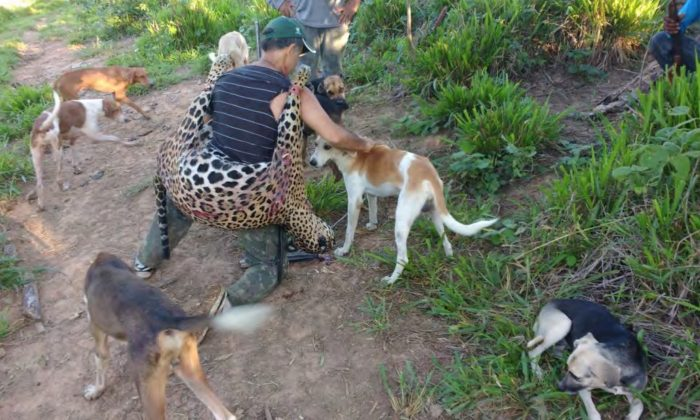 Temistocles Barbosa Freire, dentista y presunto miembro de una banda de cazadores furtivos, es visto rodeado de perros de caza, sosteniendo un jaguar muerto. (Ministerio Público Federal)