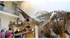 Descubren triceratops de 68 millones de años cerca de las Montañas Rocosas