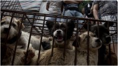 Liberan de la cárcel a la mujer de Puebla acusada de matar perros para preparar carne enchilada