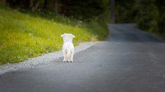 Perro sigue esperando a su dueño en la carretera después de 18 meses de su muerte en un accidente