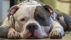 Cachorrita torturada por su dueño es sacrificada y ahora él cumple una condena de 10 años en prisión