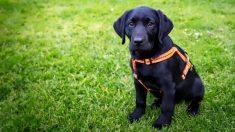 Conmovedora foto de un perro esperando que su dueño fallecido regrese le consigue un nuevo hogar