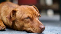 Fotógrafo visita una pequeña isla desierta, pero todo cambia cuando ve a un cachorro hambriento