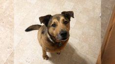 Un perro triste no puede estar más feliz cuando es adoptado después de 2.381 días de rechazo