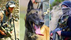 Perro policía salva a las fuerzas especiales británicas de una emboscada terrorista