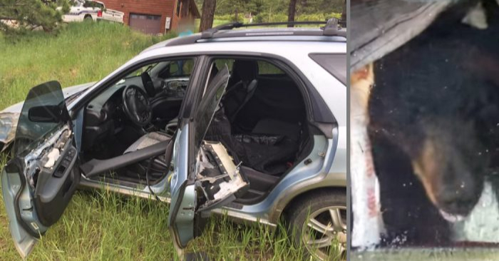 Se sospecha que un oso silvestre estrelló un auto sin seguro en Aspen Park, el 4 de julio de 2019. (Oficina del Alguacil del Condado de Boulder y Colorado Parks and Wildlife)