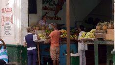 Disidentes cubanos denuncian que el régimen vende carne podrida a diabéticos y mujeres embarazadas