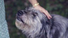 Ecuador: Donan comida envenenada a varios refugios y matan a más de 20 perros