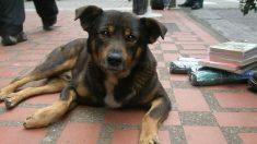 Abuelito vende chicles en las calles de Ciudad de México para que su perro no pase hambre