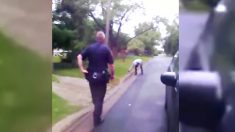 Policías se sorprenden al ver a un adolescente dando RCP a una ardilla que golpeó con su auto