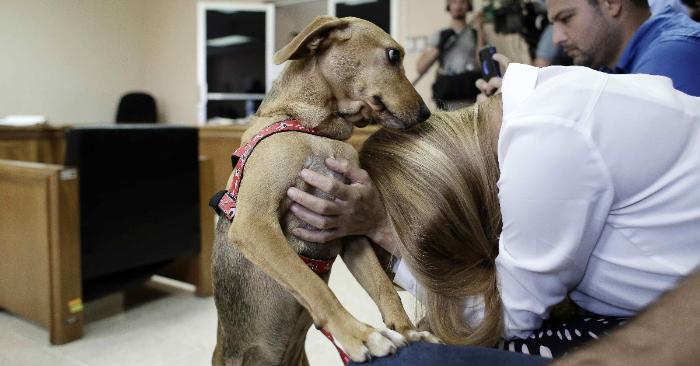 Isabel Aguilar abraza a su perro Campeón este viernes en San José (Costa Rica). Un fallo dejó absuelta por duda a una mujer identificada como María Reina González Oconitrillo por el delito de crueldad contra los animales. EFE/Maribel Arango
