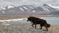 Famoso perrito guía a los turistas en la montaña de los 7 Colores en Perú: ¡todos quieren conocerlo!