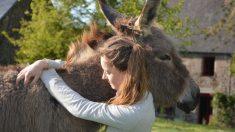 Pintan rayas a burros para que parezcan cebras en zoo de España y los denuncian por maltrato