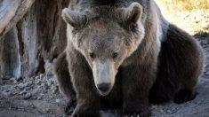 """Foto de un oso de """"vacaciones"""" tomando un relajado baño de barro arrasa las redes"""