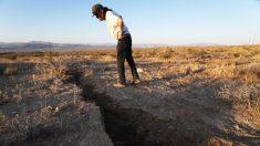 Miles de abejorros mueren tras el terremoto de California, al parecer perdieron sus nidos bajo tierra