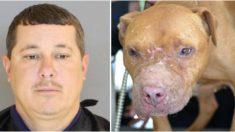 Rescatan 27 perros heridos en peleas clandestinas y piden 135 años de cárcel para el responsable