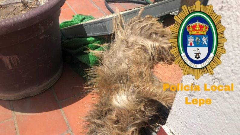 Perrito encontrado muerto en la azotea de un departamento en Lepe el 22 de julio, (Policía de Lepe)