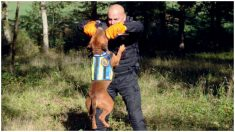 Pitbulls de refugios son adoptados y entrenados por la policía y los resultados son sorprendentes