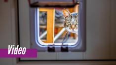 Pasa 1.5 horas construyendo una puerta para su gato: la forma en que entra el minino es divertidísima