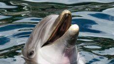 Perrita comienza a ladrar y encuentran a un bebé delfín lesionado en la playa