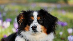 Sin maltrato ni soledad: en este país no hay perros sin hogar, un reto que todo el mundo debería asumir