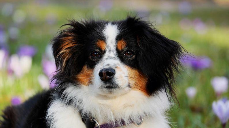 Los perros reciben buen trato y cariño en este país y ninguno vaga sin dueño en la calle. Imagen ilustrativa. (Crédito: Pixabay / 1195798)