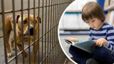 Niño con autismo logra calmar a un pitbull agresivo leyéndole cuentos