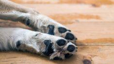 Rescatan a una perra enterrada viva en una playa de Hawái