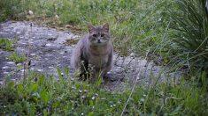 Niño se hace amigo de un solitario gato tuerto sin saber que los filmaban