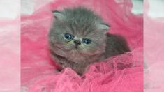 Gatito recién nacido sorprende a su rescatista cuando empieza a cambiar de color